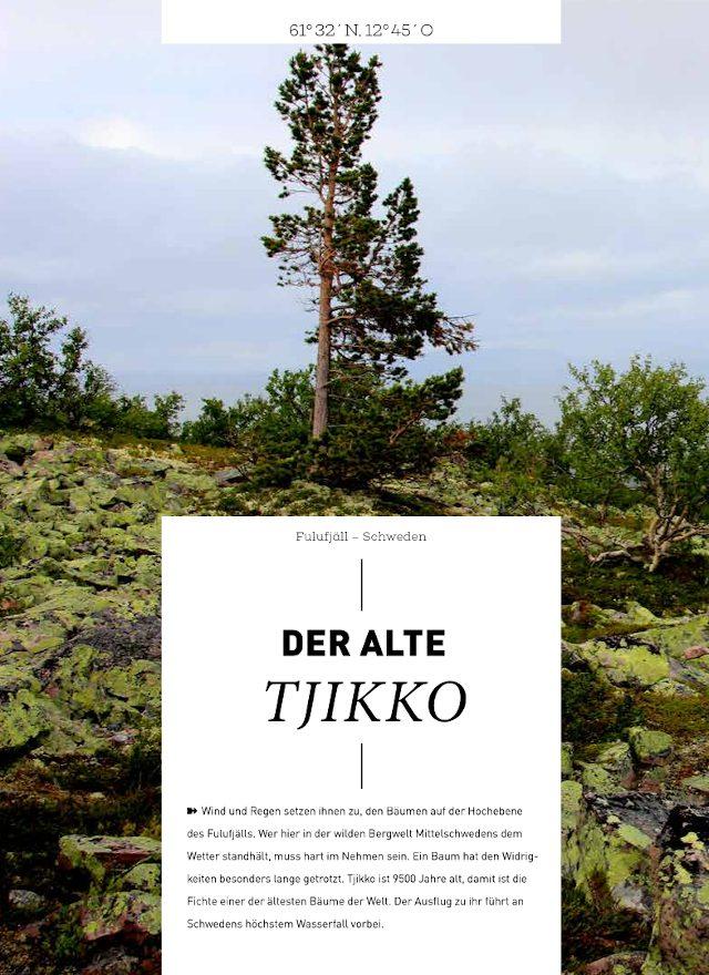 Text im Waldbuch Tjikko 1 2018